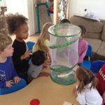 Caterpillars to Butterflies at Mary's Valencia Schoolhouse