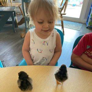 Ella and 2 Black Chicks