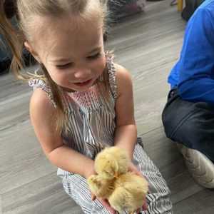 Lily With Two Baby Chicks