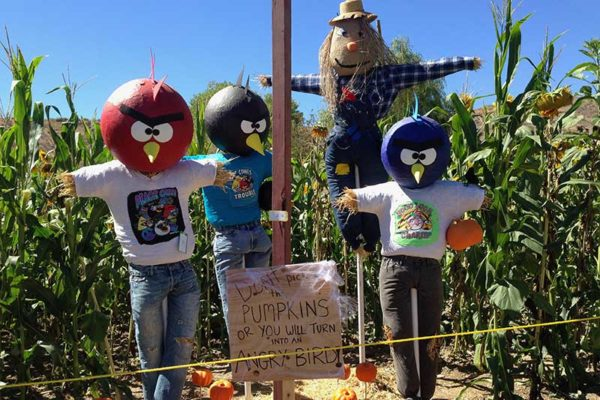 Scarecrow Enty at Lombardies Ranch 011