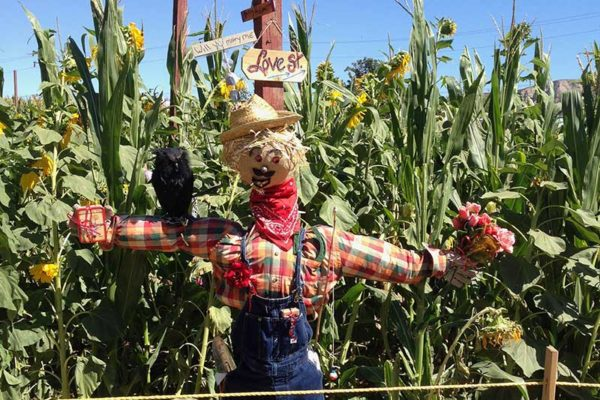 Scarecrow Enty at Lombardies Ranch 012